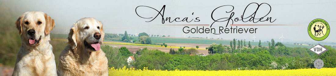 Anca's Golden